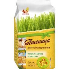 """Пшеница для проращивания """"Дивинка"""" (500г)"""